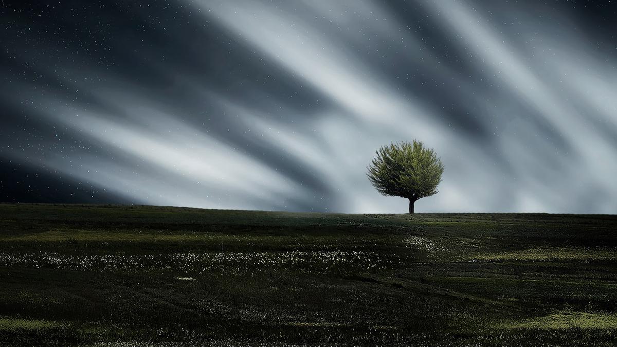 Trädet - Med Stina von Sydow
